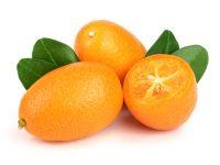 cala-kumquat-gin-notes-degustation-en-bouche-shutterstock-1011486382